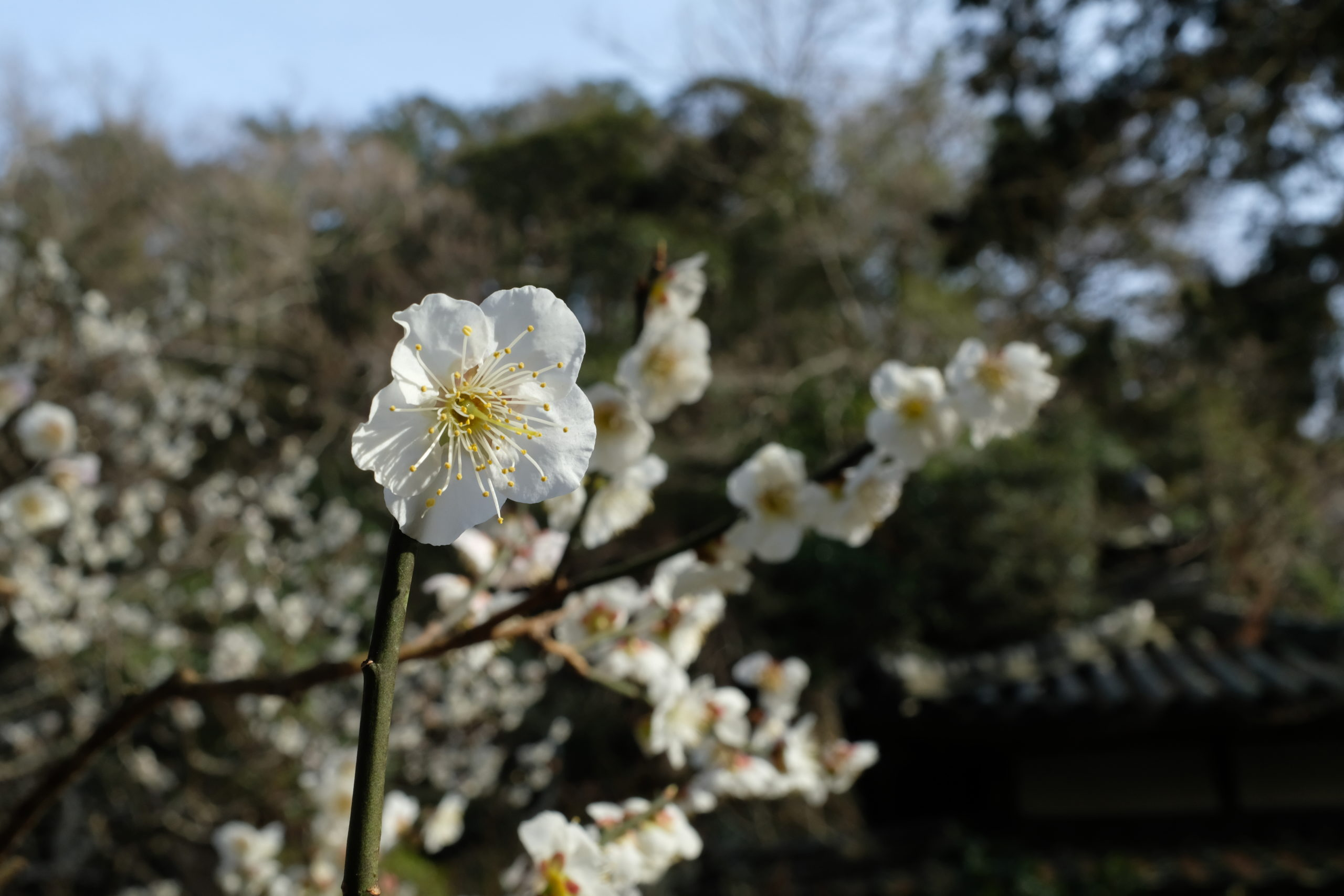 Integrating Japanese Traditions and Global Climate efforts